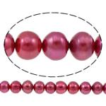 Button kultivierte Süßwasserperlen, Natürliche kultivierte Süßwasserperlen, Knopf, Purpurrot, 10-11mm, Bohrung:ca. 0.8mm, verkauft per ca. 14.5 ZollInch Strang