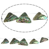 Seeohr Muschelperlen, Klumpen, 18-33.5x13-24x4-7mm, Bohrung:ca. 1mm, Länge:ca. 15 ZollInch, 5SträngeStrang/Menge, ca. 15PCs/Strang, verkauft von Menge