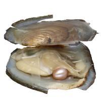 Süßwasser kultivierte Liebe wünschen Perlenaustern, Perlen, keine, verkauft von PC