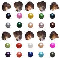 Süßwasser kultivierte Liebe wünschen Perlenaustern, Natürliche kultivierte Süßwasserperlen, Kartoffel, gemischte Farben, 7-8mm, 50PCs/Menge, verkauft von Menge