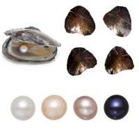 Süßwasser kultivierte Liebe wünschen Perlenaustern, Perlen, Kartoffel, gemischte Farben, 7-8mm, 4PCs/Menge, verkauft von Menge