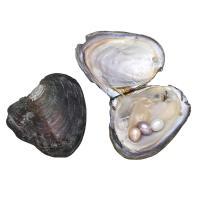 Süßwasser kultivierte Liebe wünschen Perlenaustern, Perlen, verschiedene Größen vorhanden, 10PCs/Menge, verkauft von Menge