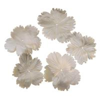 Achat Perlen, Weiße Muschel, Blume, weiß, 37-45x33-39x4mm, Bohrung:ca. 1mm, verkauft von PC